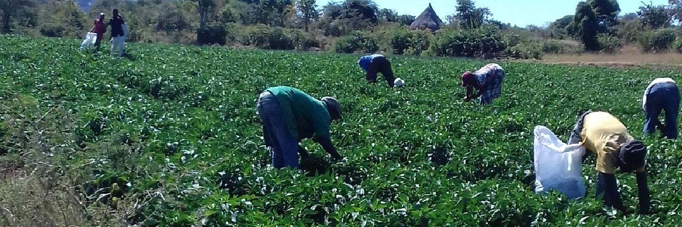 Supporting smallholder farmer dreams